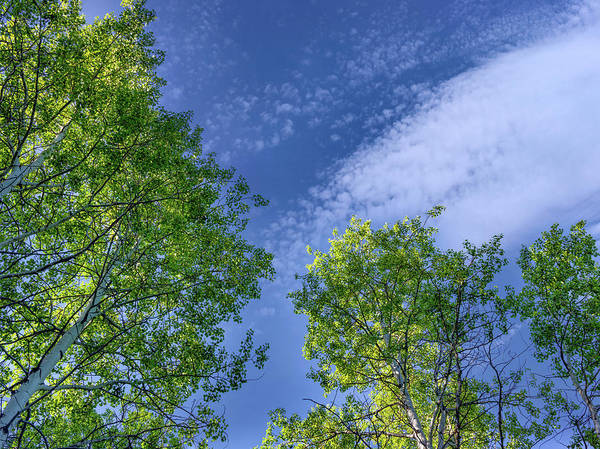 Photograph - Looking Up 9 by Leland D Howard
