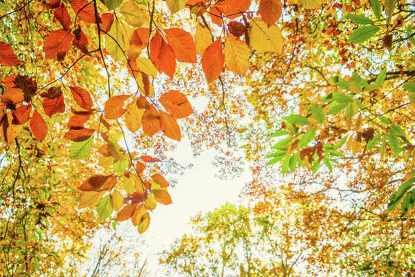 Wall Art - Photograph - Looking Up In Autumn by Delphimages Photo Creations