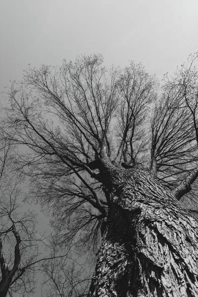Wall Art - Photograph - Looking Up Through The Trees by Liz Albro