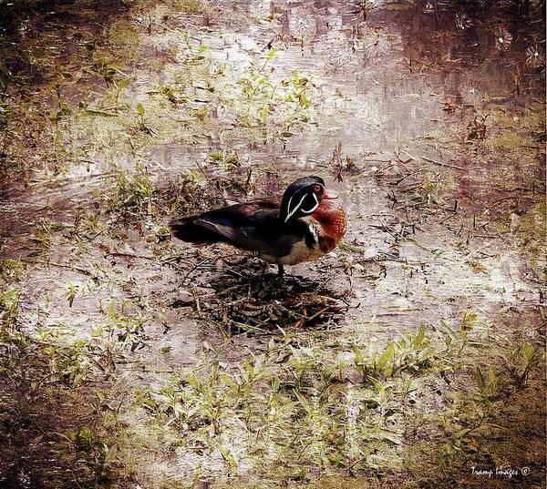 Digital Art - Lord Of The Ducks by Wesley Nesbitt