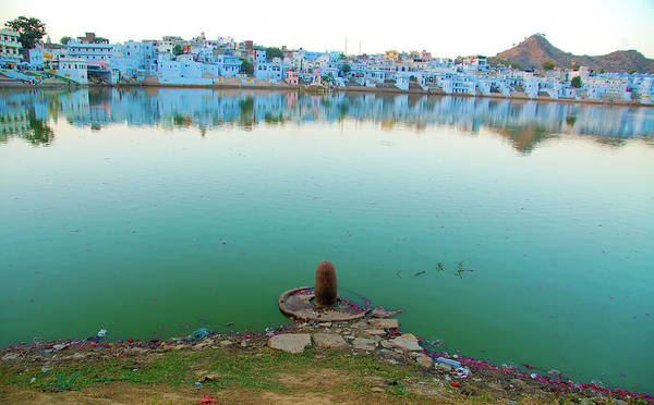 Wall Art - Photograph - Lord Shivas - Pushkar by © Sachin Saxena. All Rights Reserved.