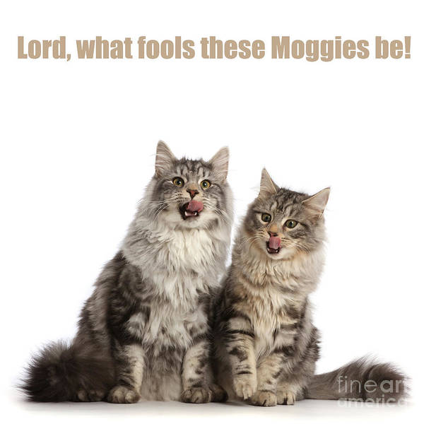 Photograph - Lord, What Fools These Moggies Be by Warren Photographic