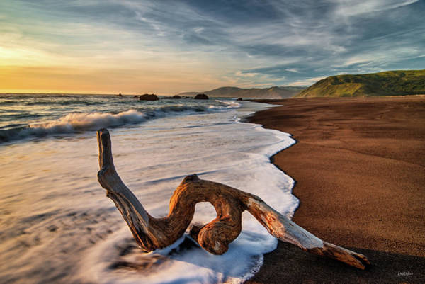 Photograph - Lost Coast Driftwood by Leland D Howard