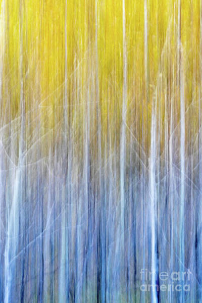 Wall Art - Photograph - Lost In A Yellow Forest by Todd Bielby