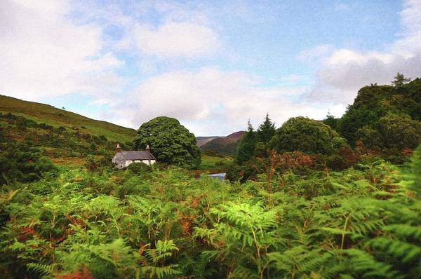 Photograph - Lost In Ferns. Wicklow Hills by Jenny Rainbow