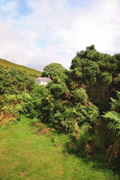 Photograph - Lost In Ferns. Wicklow Mountains by Jenny Rainbow