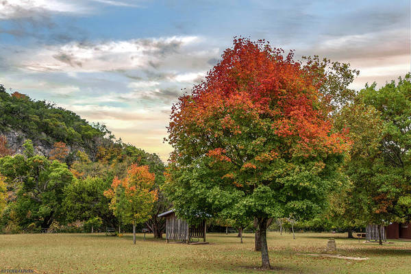 Photograph - Lost Maples State Park by Gaylon Yancy