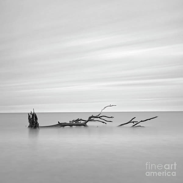 Photograph - Lost Tree by Patrick M Lynch