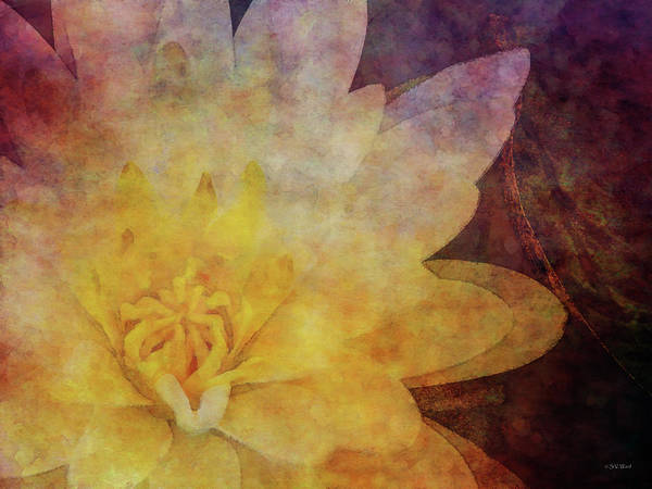 Photograph - Lotus 4166 Idp_2 by Steven Ward