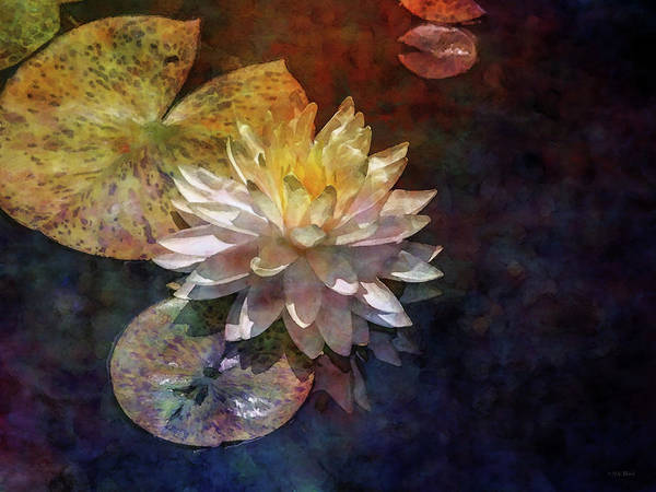 Photograph - Lotus And The Void 2934 Idp_4 by Steven Ward