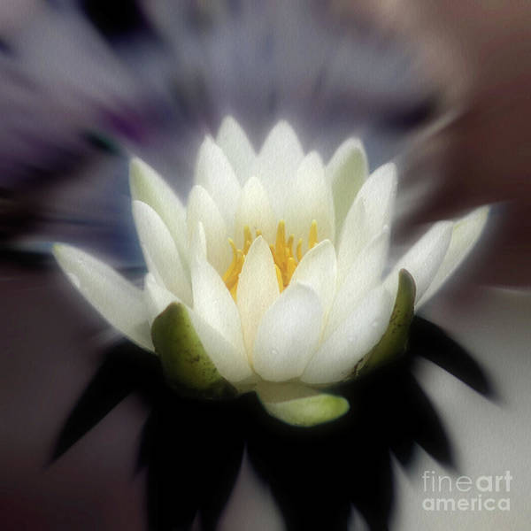 Photograph - Lotus Blossom Enhanced by Smilin Eyes  Treasures