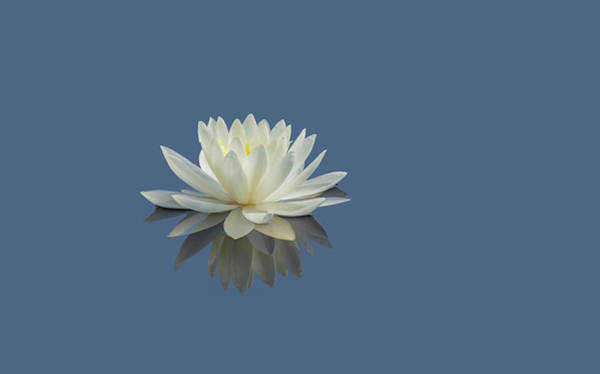 Photograph - Lotus Flower E by Jim Dollar