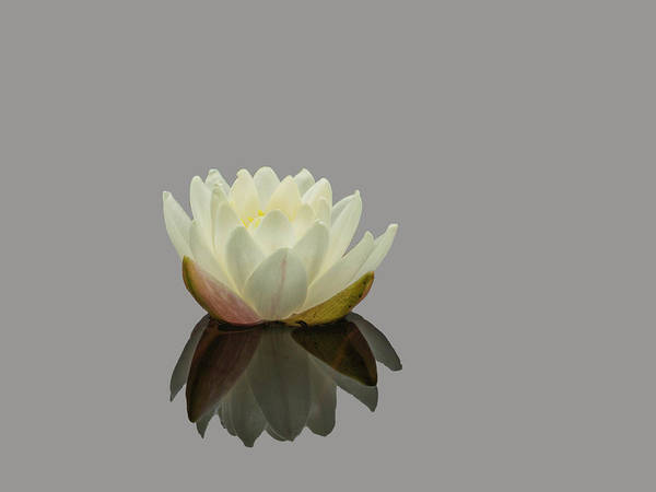 Photograph - Lotus Flower Ee by Jim Dollar