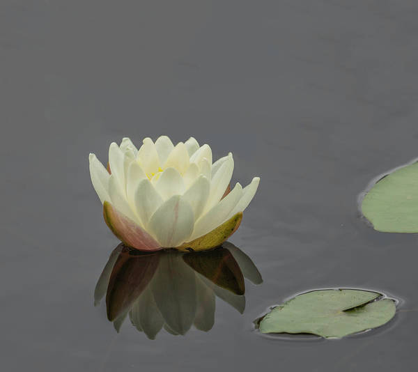 Photograph - Lotus Flower H by Jim Dollar