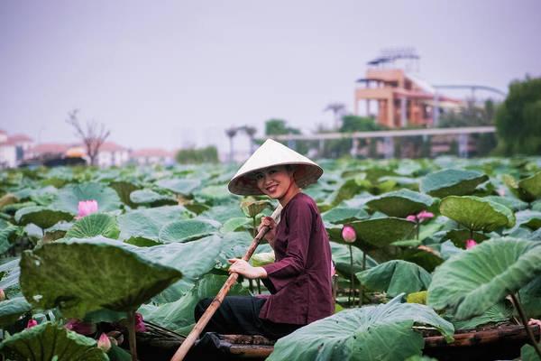 Wall Art - Photograph - Lotus Flower Harvesting - Hanoi, Vietnam by 117 Imagery