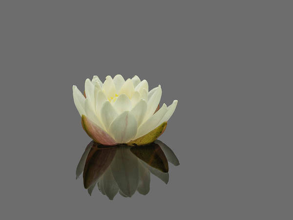 Photograph - Lotus Flower G by Jim Dollar