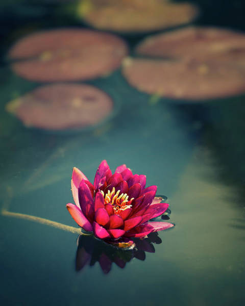 Single Leaf Wall Art - Photograph - Lotus In Lake by Copyright Alex Arnaoudov