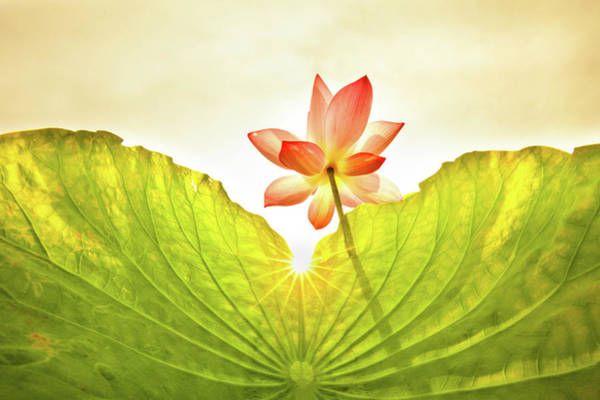 Wall Art - Photograph - Lotus On Sky Background by Wan Ru Chen