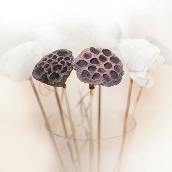 Lotus Seed Wall Art - Photograph - Lotus Seedheads by Peter Chadwick Lrps