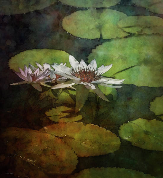 Photograph - Lotus Trio In The Pattern Of Pads 2923 Idp_3 by Steven Ward