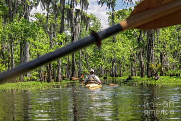 Photograph - Louisiana Bayou by Jim West