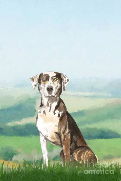 Pedigree Painting - Louisiana Catahoula Leopard Dog by John Edwards