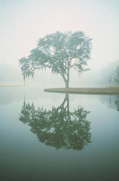 Louisiana Photograph - Louisiana, Oak Tree With Reflection by Ken Glaser