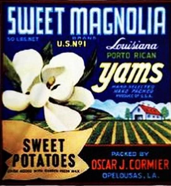 Ms Mixed Media - Louisiana Yam Label by Ms Robin Lewis