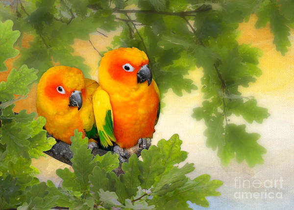 Mixed Media - Love Birds by Morag Bates