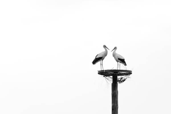 Photograph - Love by Daniel Kulinski