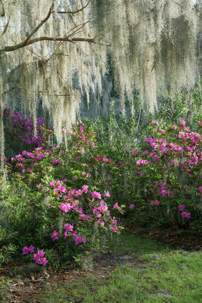 Wall Art - Photograph - Love In My Garden by Iris Greenwell