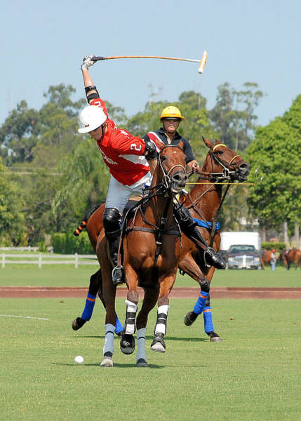 Photograph - Love Life, Play Polo by Perry Correll