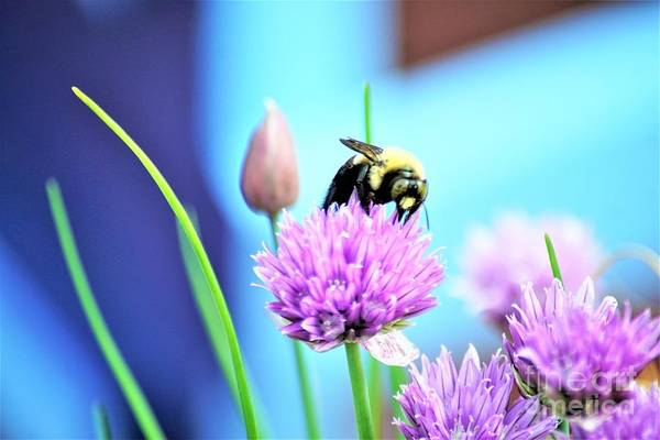 Photograph - Love My Chives by Merle Grenz