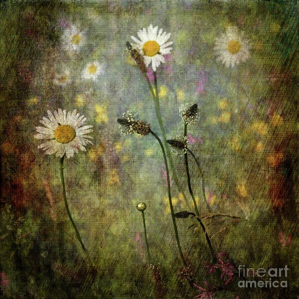 Digital Art - Love Nature by Liz Alderdice