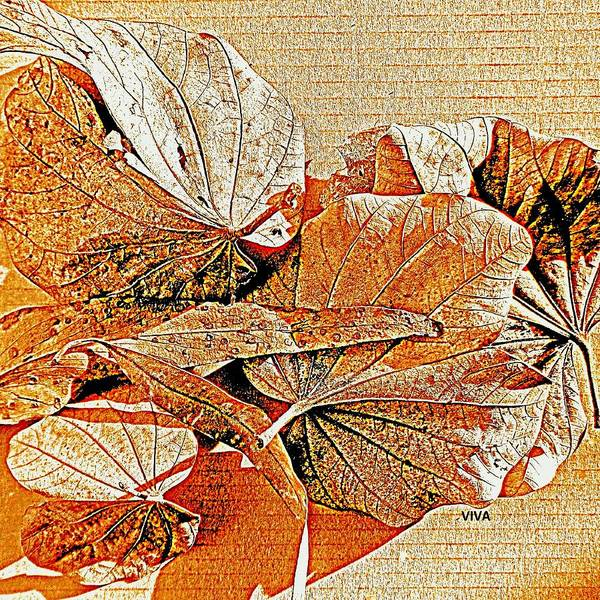 Photograph - Lovely Leaves - Autumn Color by VIVA Anderson