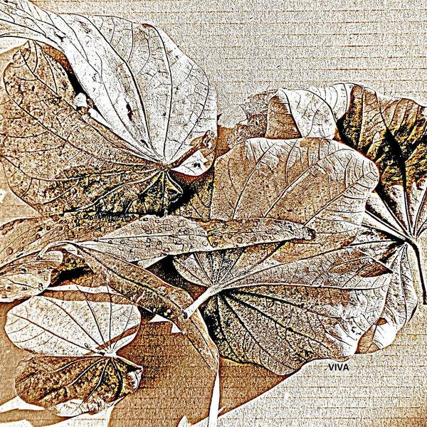Photograph - Lovely Leaves Litterfall  by VIVA Anderson