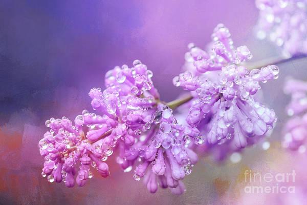 Photograph - The Magic Of Lilacs In The Rain by Anita Pollak