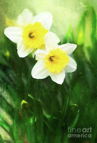 Photograph - Lovely Painted Daffodil Pair by Anita Pollak