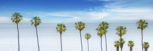Wall Art - Photograph - Lovely Palm Trees At The Ocean  by Melanie Viola