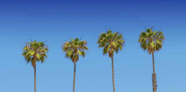 Wall Art - Photograph - Lovely Palm Trees by Melanie Viola