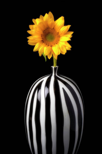 Wall Art - Photograph - Lovely Sunflower In Striped Vase by Garry Gay