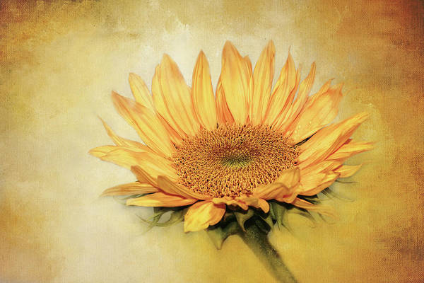 Wall Art - Digital Art - Lovely, Textured Sunflower by Terry Davis