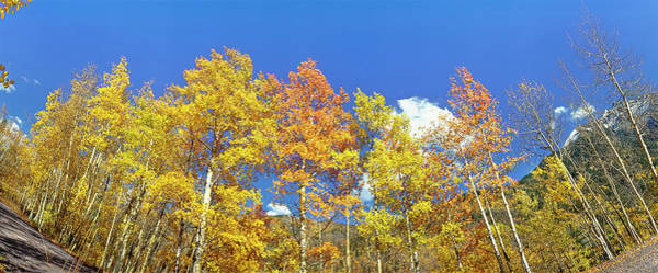 Wall Art - Photograph - Low Angle View Of Autumnal Maple by Panoramic Images