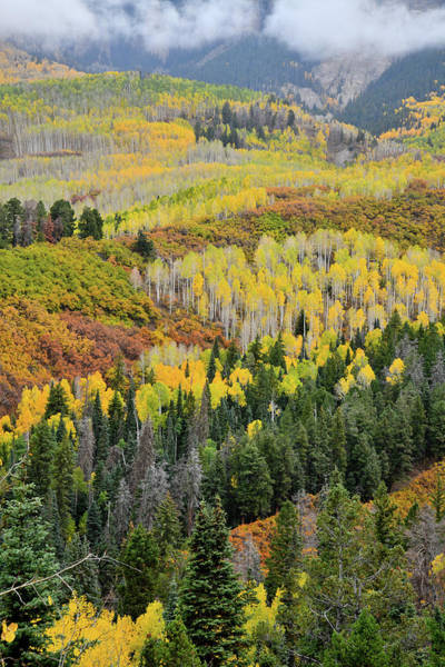 Photograph - Low Clouds Over Fall Colors Near Owl Creek Pass by Ray Mathis