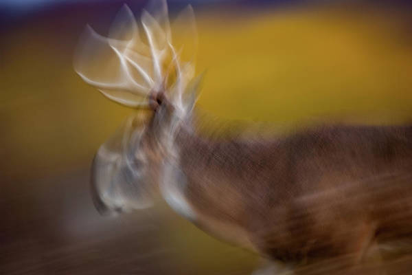 Photograph - Low Light Motion by Jeff Phillippi