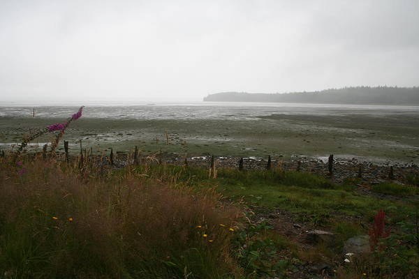 Photograph - Low Tide Willapa by Dylan Punke