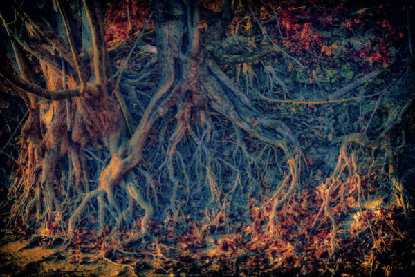 Wall Art - Photograph - Low Water Levels by Rabiri Us