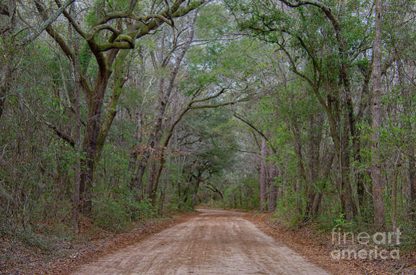Photograph - Lowcountry Dirt Road To The Angel Oak by Dale Powell