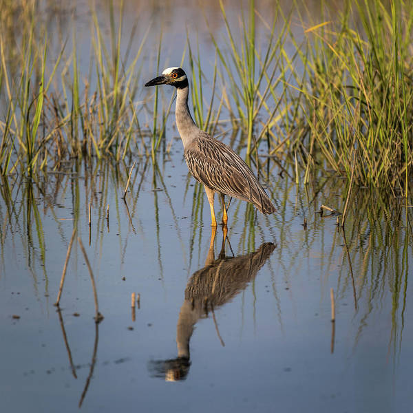 Photograph - Lowcountry Heron by Donnie Whitaker
