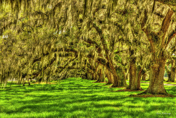 Photograph - Lowcountry Live Oaks Tomotley Plantation South Carolina Landscape Art by Reid Callaway